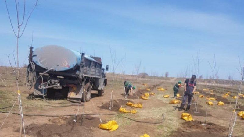 Қарағанды триатлон паркінде ағаш отырғызу жұмыстары басталды