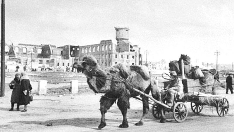 1941-1945: дерек пен дәйек